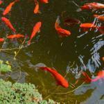 Fische Klinik Degerloch